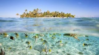 Insulele Cook - unul dintre cele mai mari sanctuare marine din lume