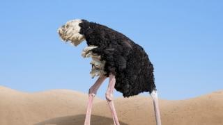 50.000 lei pentru firme, ca să scoată capul din nisip