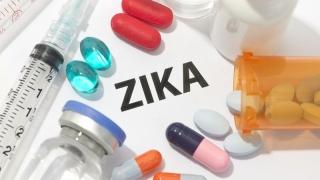 În următoarele 10 zile - studii pe animale ale unui vaccin împotriva Zika