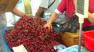Veterinarii au descoperit peste o tonă de cireșe cu pesticid!