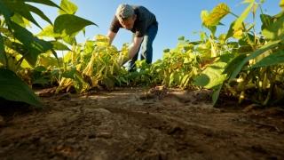 LAPAR acuză: Banii pentru agricultură au mers la protecţie socială