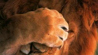 Leul continuă căderea liberă! Nimic nu-l poate opri!