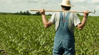 Liber la adeverinţe pentru fermierii care au datorii la bugetul local