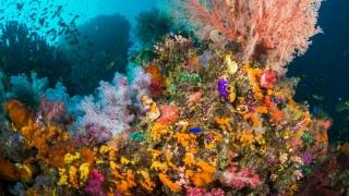 Marea Britanie a distrus recife de corali unice în Indonezia. Ambasadorul, chemat să dea socoteală