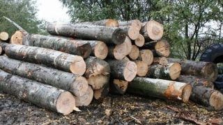Matrapazlâcurile cu lemn i-au băgat în bucluc