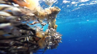 Micile fragmente de plastic din oceane, pericol pentru moluște