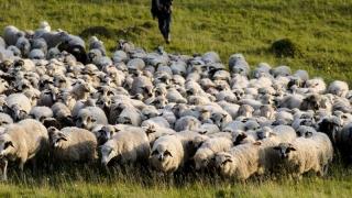 Ministrul Agriculturii vrea să zootehnizeze România