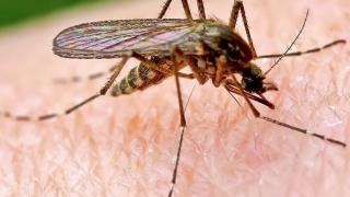 Mușcătura de țânțar nu este identică la doi oameni