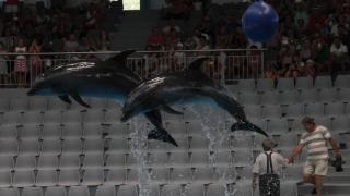 "Ne luăm ""Adio"" de la acrobațiile delfinilor?"