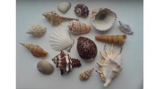 Cochiliile-suvenir de la mare sunt periculoase! Vezi pentru cine