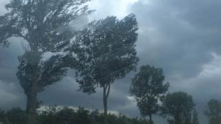 Cod portocaliu de vijelie în Dobrogea