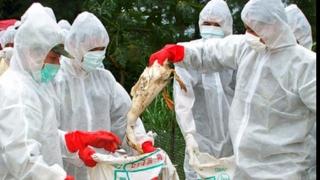 Alertă de gripă aviară! Alte patru păsări găsite moarte