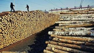 Amenzi de 2,3 milioane lei în piața lemnului