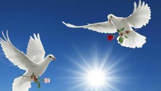 Consilierii locali din Medgidia s-au întâlnit cu Porumbelul Păcii?