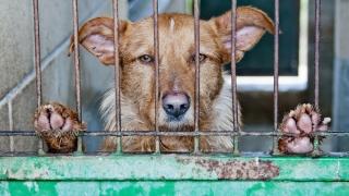 Constanţa. Primăria va gestiona mai eficient situaţia animalelor abandonate