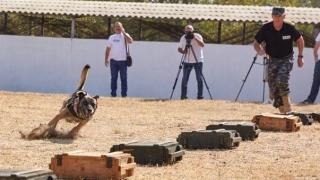 2 milioane de euro aduse statului, într-un an, de câinii anticontrabandă