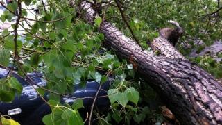 TRAGEDIE! Mai mulți morți și zeci de răniți în urma prăbușirii unui copac