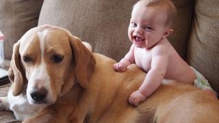 Traiul lângă animale de companie poate reduce incidența alergiilor și obezității