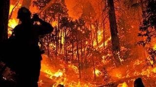 Coşmar în California! Incendii devastatoare!