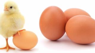 Ouăle, din ce în ce mai puţine şi mai scumpe! Vezi de ce!