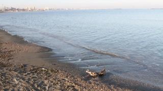Peste 240 de păsări moarte, la Constanța!