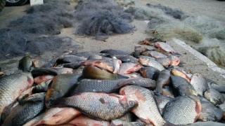 Un sfert de tonă de pește și trei ambarcațiuni, confiscate de la braconieri