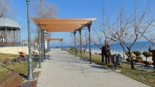 Noi plantări de arbori în Constanța. Vezi zonele vizate!