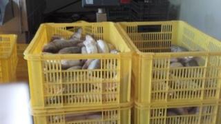 Polițiștii au confiscat 300 de kilograme de pește