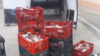 Prins cu 90 de kilograme de pește pentru care nu avea acte