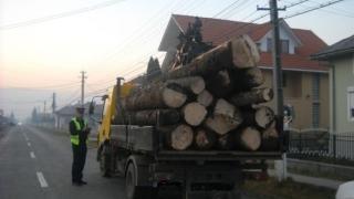 Prins în flagrant. Transporta lemne fără acte