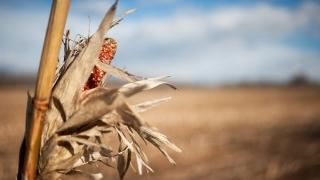 Producția agricolă a scăzut la majoritatea culturilor în 2015