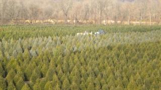 """Promisiuni Romsilva: """"Fabrică"""" modernă de puieți forestieri pentru la anul! Nu se mai umblă cu cazmaua!"""