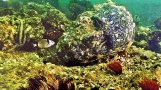 Cranii de cristal, descoperite la bordul unor epave vechi de milenii