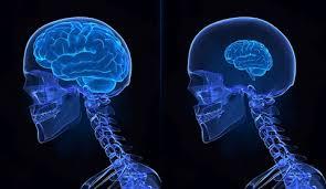 Muzeu dedicat observării unor creiere bolnave