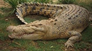 Corpul copilului atacat de un aligator, în Statele Unite, a fost găsit