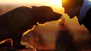 Știați că omul nu a domesticit câinele?!