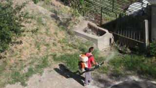Țânțarii invadează Constanța! Cum ne apărăm de ei?
