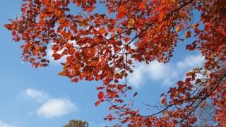 Tradiții și obiceiuri în ultima săptămână din septembrie