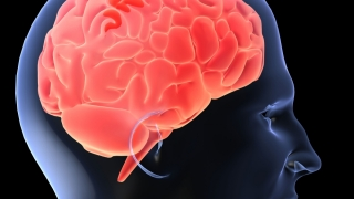 Trăirile și sentimentele negative dăunează creierului