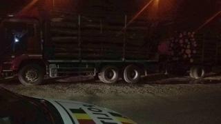 Transportul de lemn din fondul forestier pe timpul nopții, interzis!
