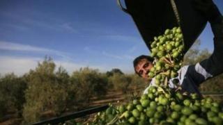 Incredibil! De ce ajung românii din Diaspora sclavi pe plantații