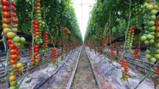 Birocrația încurcă fermierii la depunerea dosarelor pentru obținerea  subvenției