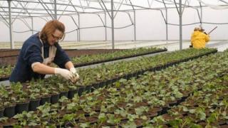 Culturile ecologice din România, pe mai puțin de 1% din terenurile agricole