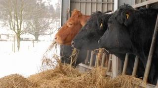 Cum protejăm animalele pe timp de iarnă?