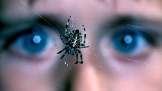 Cum poate fi tratată frica de păianjeni. Ce spun oamenii de știință