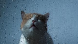 Cum va fi vremea în următoarele 3 zile, la Constanța?