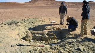 Un crocodil-monstru a trăit pe... Tatooine. Cercetătorii au descoperit o fosilă!