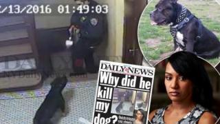 Un polițist american s-a speriat de un câine și l-a împușcat
