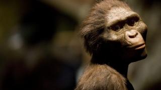 Unul din cei mai cunoscuţi strămoşi ai omului a murit după ce a căzut din copac