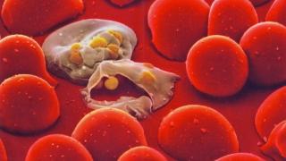 Un vaccin împotriva malariei, aflat în teste, are rezultate promițătoare